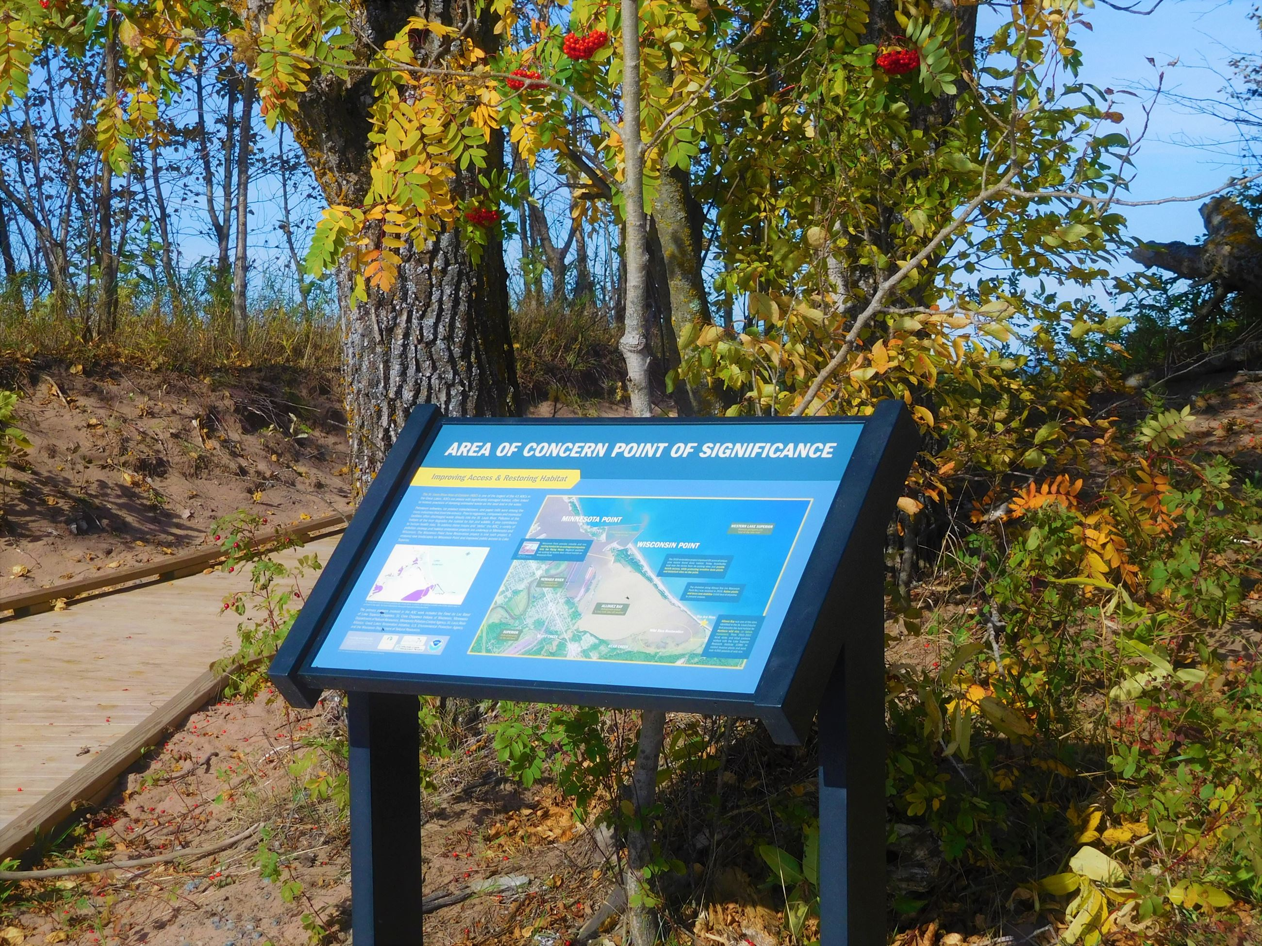 Area of Concern interpretive sign at lot one. Tree with red berries overhead.