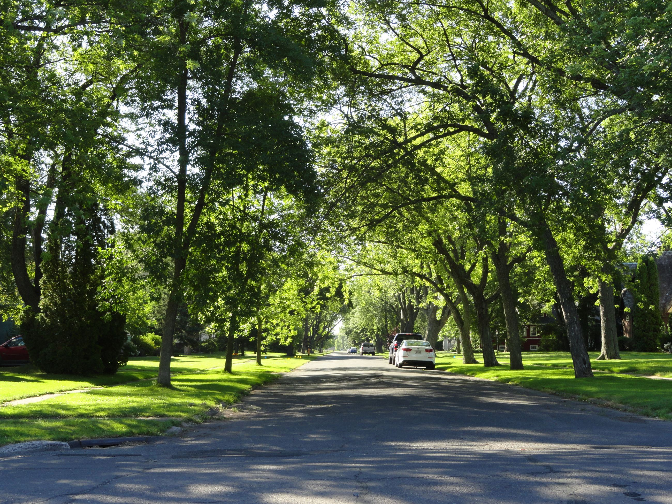Neighborhood Tree Canopy