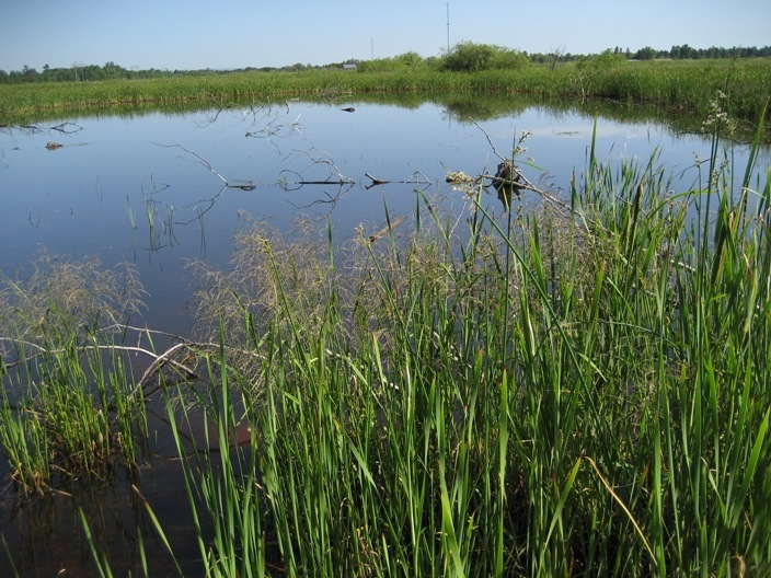 Wetlands area and vegetation